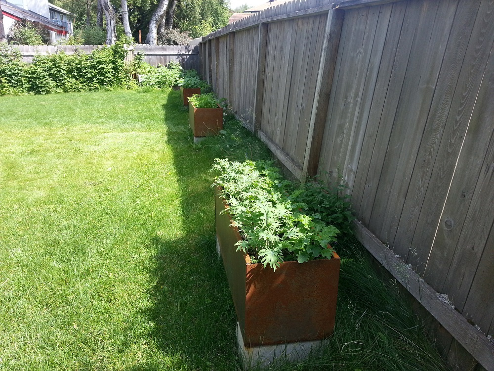 Corten steel planters herbs vegetables