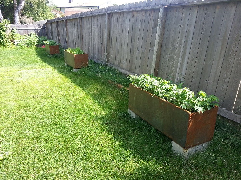 corten steel planters Kale arugula kohlrabi