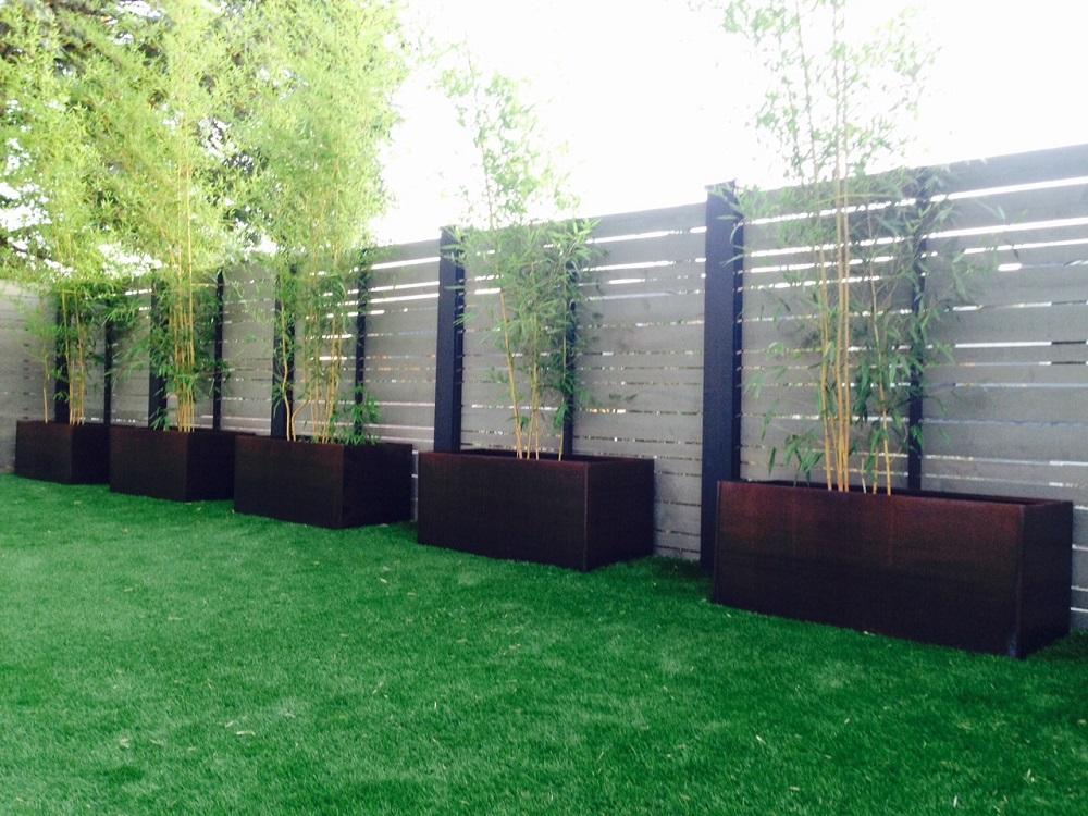 grwoing bamboo in corten steel planters
